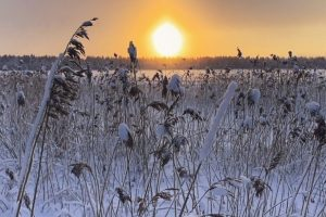 Photo showing a sun touching the horizon in a wintery landscape in Oulu, Finland